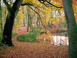 Nov. 2009 Herbststimmung im Vilser Holz